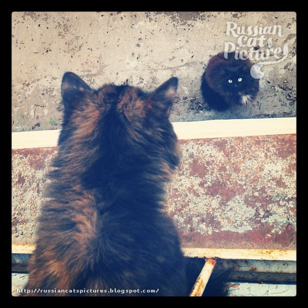 Domestic Instacats: Tortoiseshell Kitty Cat 10