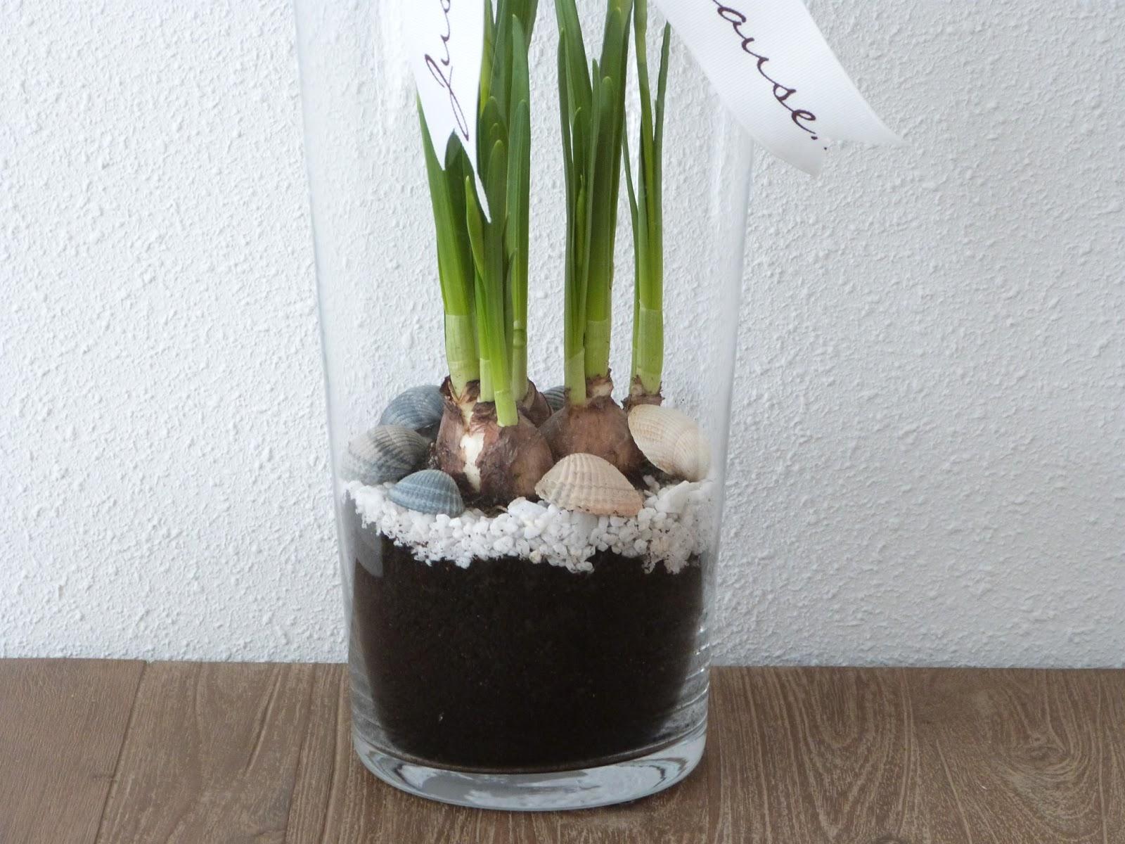 Het brocante schelpenhuisje bloembollen in glazen vaas for Decoratie in vaas