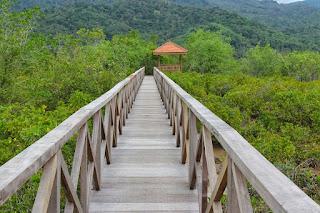 Mangrove Forest: Wisata Hutan Mangrove dan jembatan Galau di Trenggalek