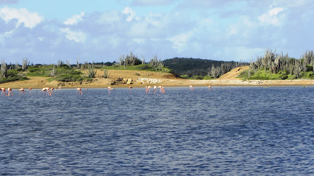 Washikemba Bonaire