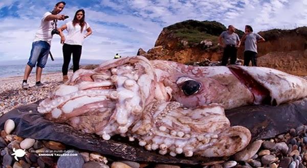 Gurami Raksasa Tergeletak di Pantai Spanyol