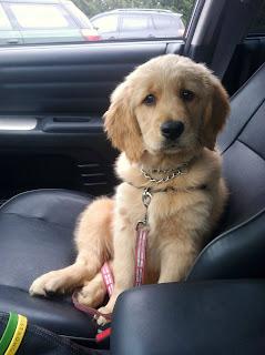 Hund auf dem Beifahrer Sitz
