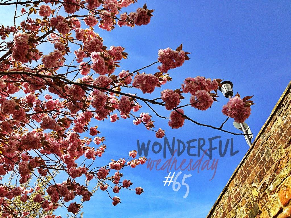 Wonderful Wednesday #65