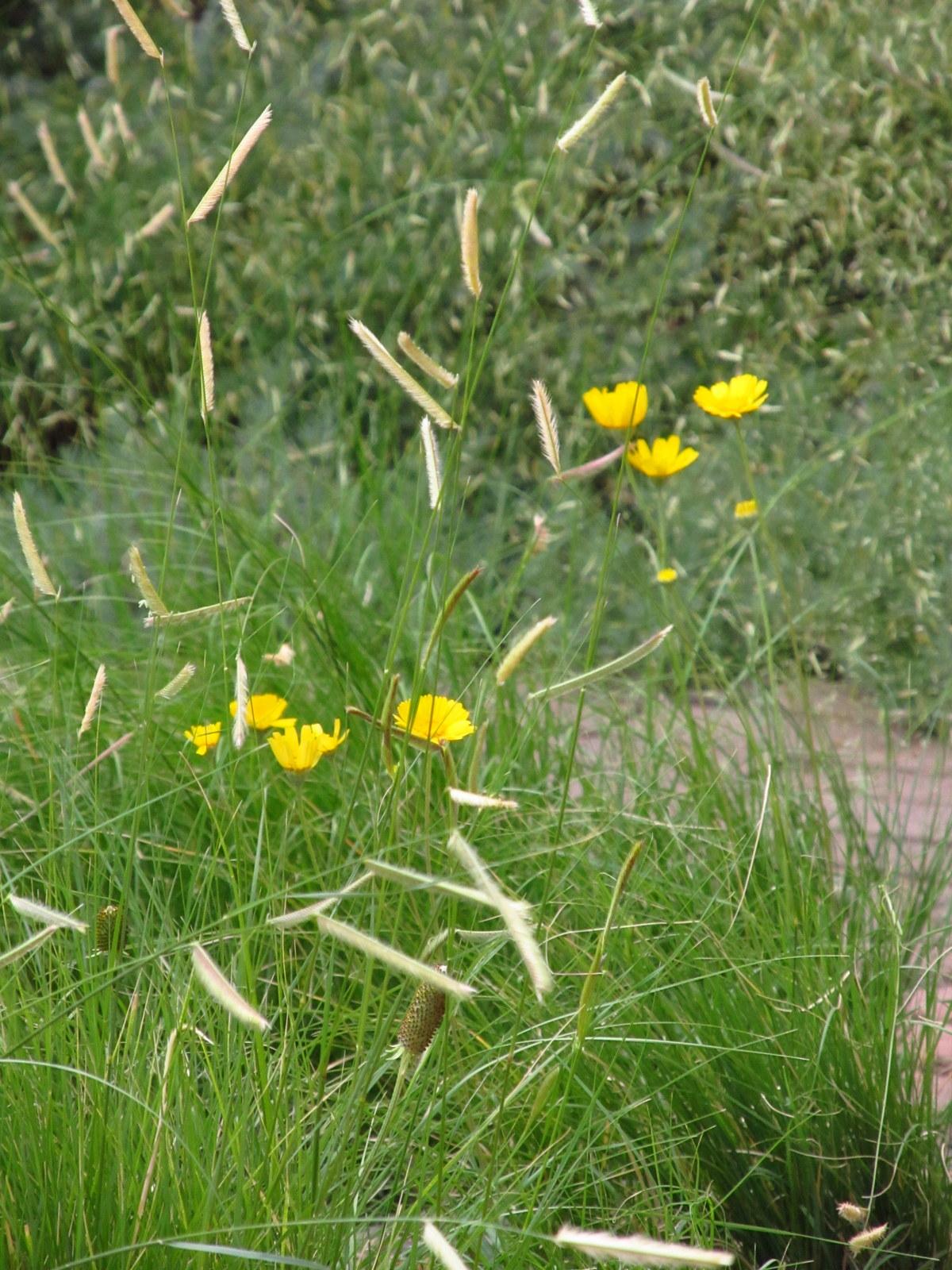 Garden grasses for Different ornamental grasses