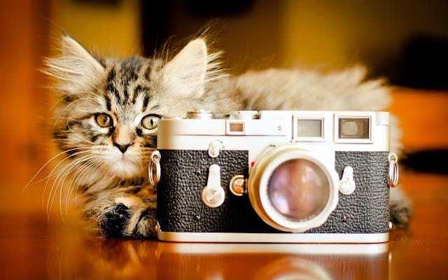 Hermoso Gatito Imágenes de Gatos en Fotoblog X
