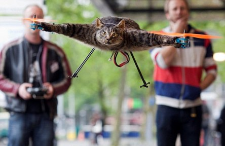 Orvillecopter kucing tterbang unik