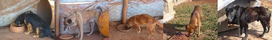 ASPA - Associação Protetora dos Animais - Sorocaba
