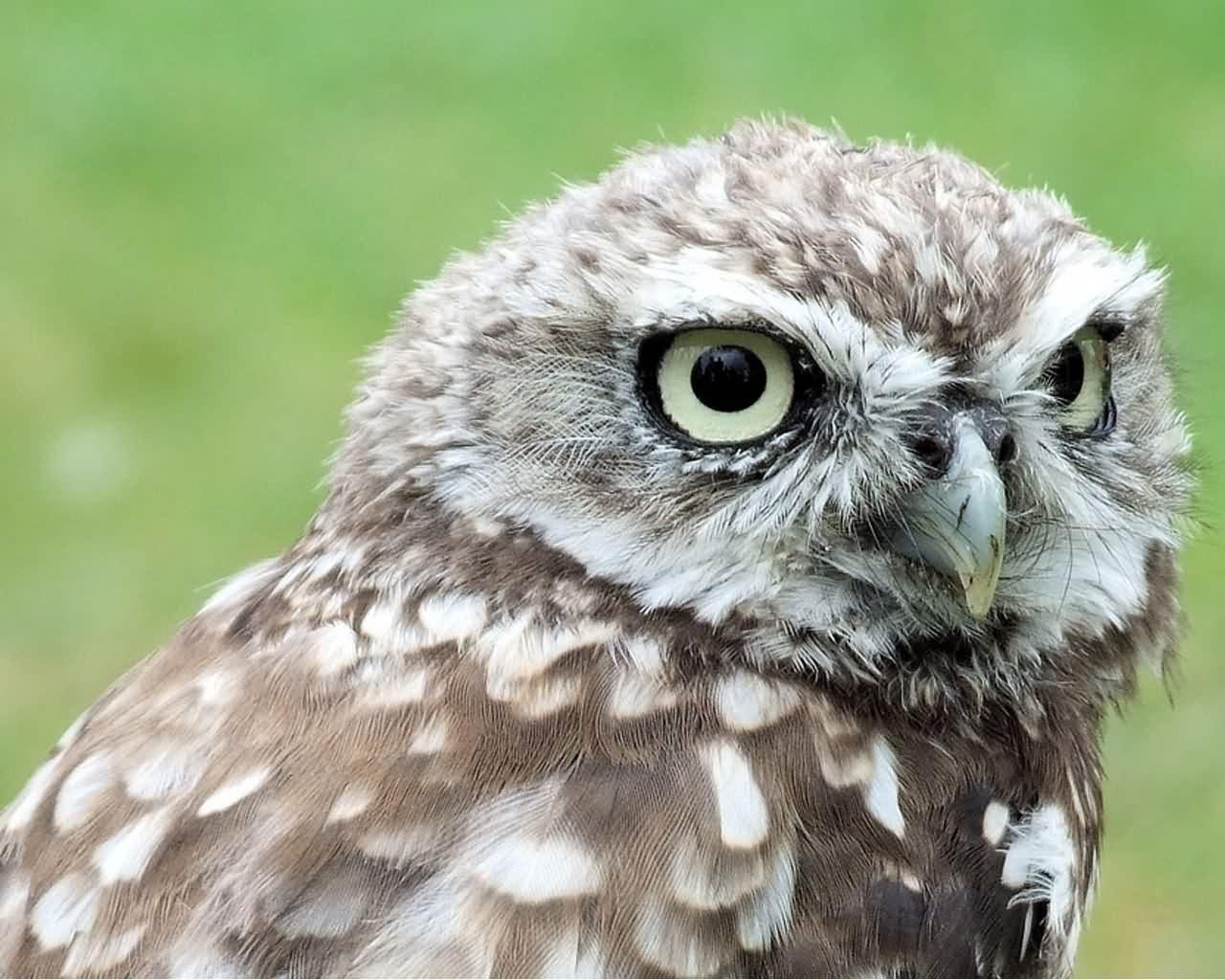 cool hd nature desktop wallpapers owl wallpapers