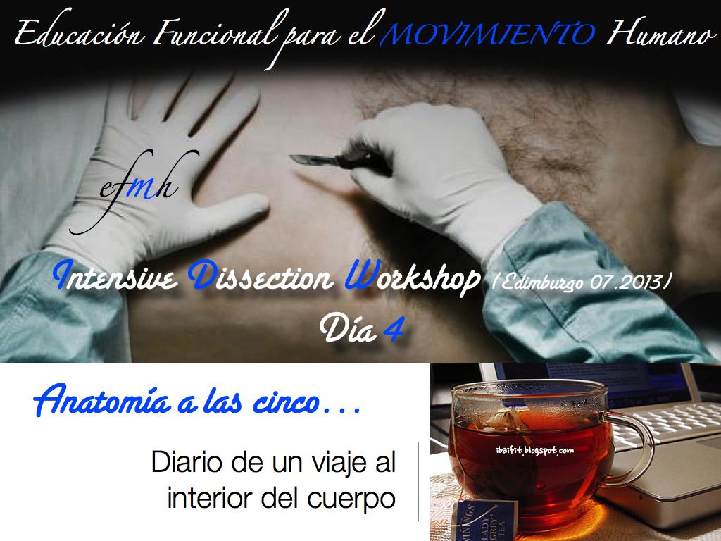 ENTRE LO MUSCULAR Y LO VISCERAL SIEMPRE UNE LO FASCIAL: Intensive ...