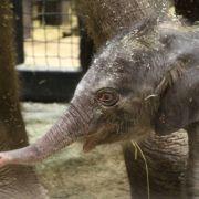 (c) Katie Pilgram/Saint Louis Zoo
