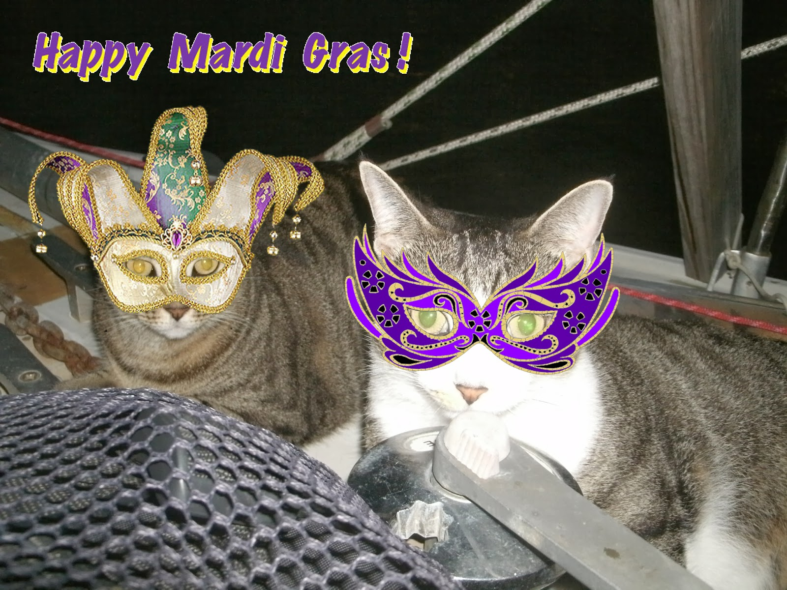 Ask for permission - mardi gras cats paradiseconnections.com