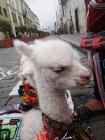 Luisa pelos Andes