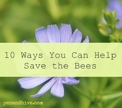 how to help honeybees