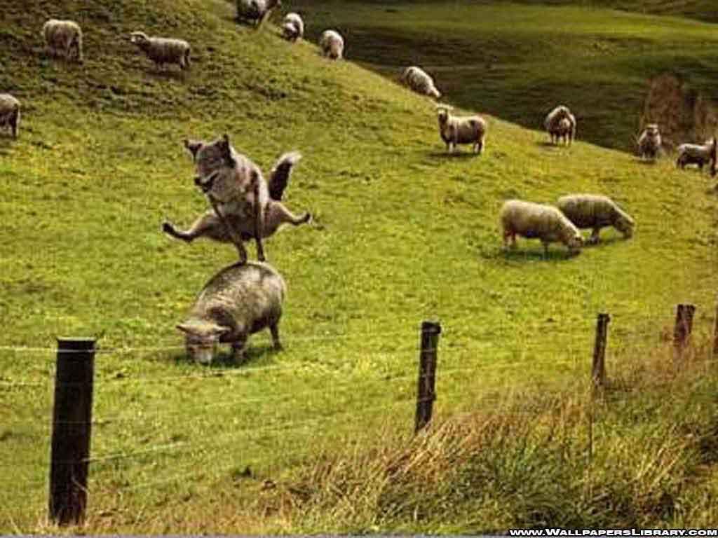 http://1.bp.blogspot.com/-SBIorSl6GhA/T3VXEwglLAI/AAAAAAAABt8/YcZgIAjtVPY/s1600/funny-wolf-and-sheeps-wallpaper.jpg