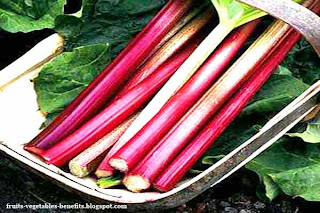 benefits_of_rhubarb_juice_fruits-vegetables-benefits.blogspot.co(benefits_of_rhubarb_juice_7)