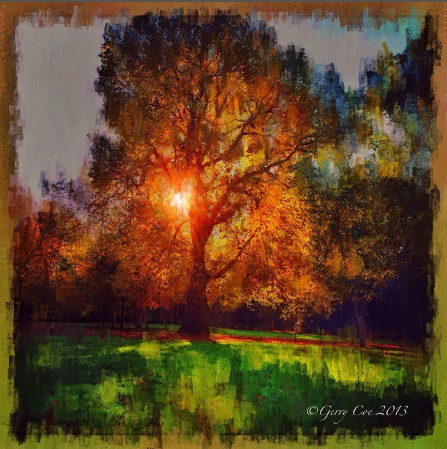 Tree of Light © Gerry Coe