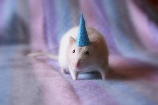 3 Razones por las que odio mi cumpleaños 3