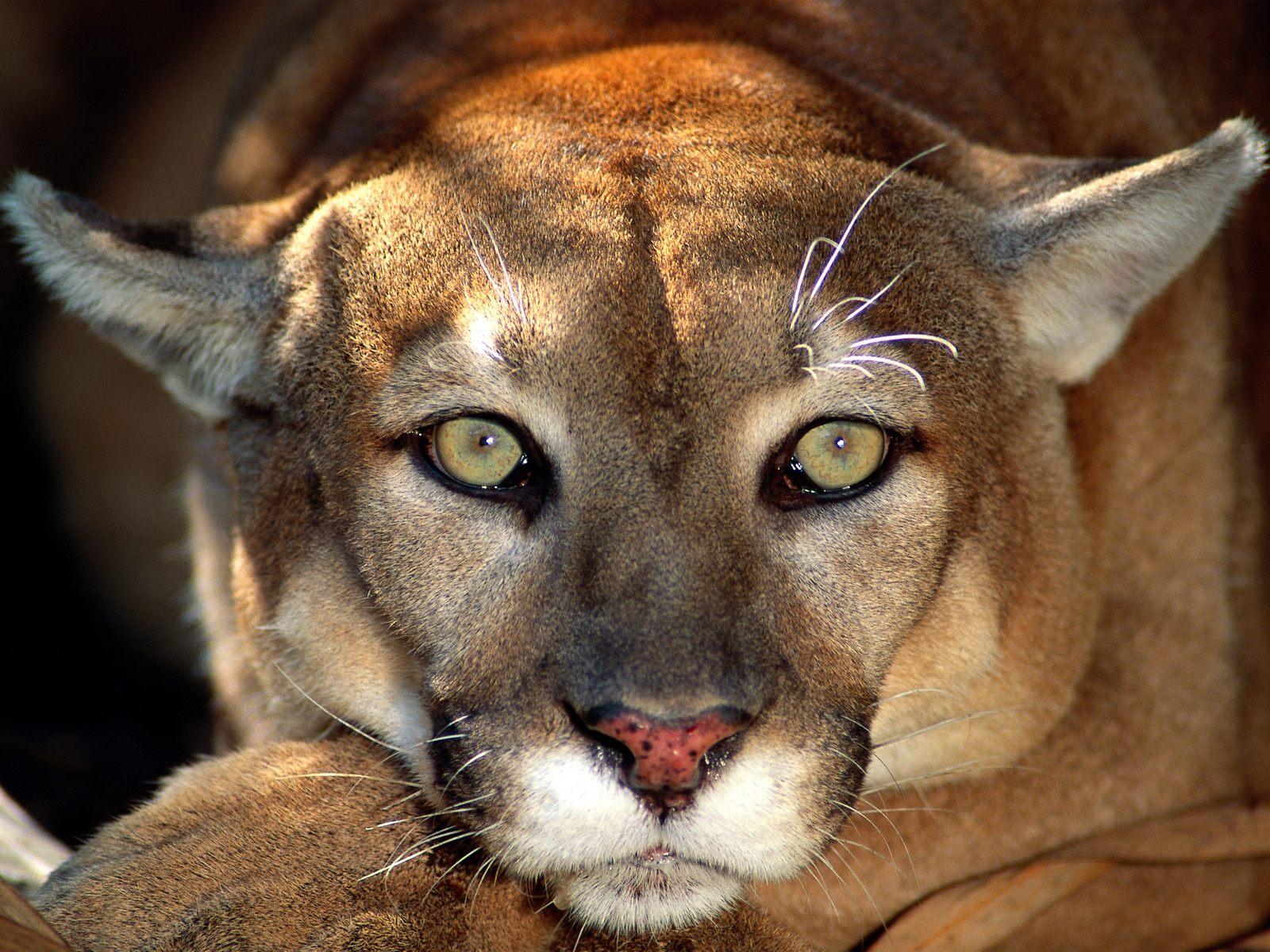 Most Beautiful Animals Latest Hd  - Beautiful Animals Wallpaper