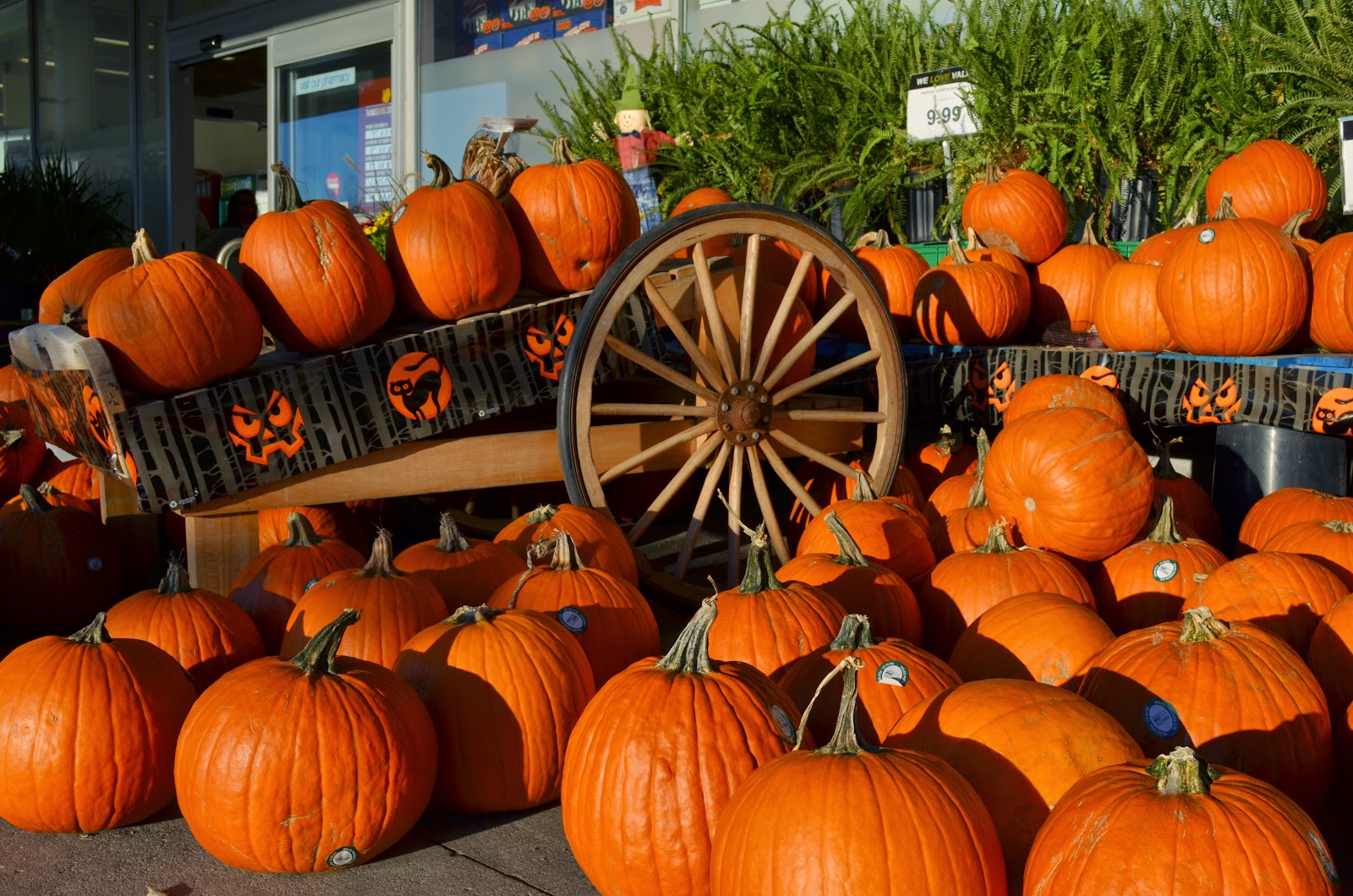 Halloween Events in Weymouth 2014
