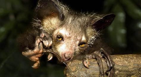 Science Minus Details: Lemurs! Aye-ayes! Mammal ...