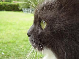 Progetto vajra perle nel tempo immagini foto art gallery incontri meditazione contemplazione zen gatto