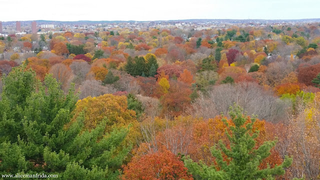 view, trees, fall foliage, New England
