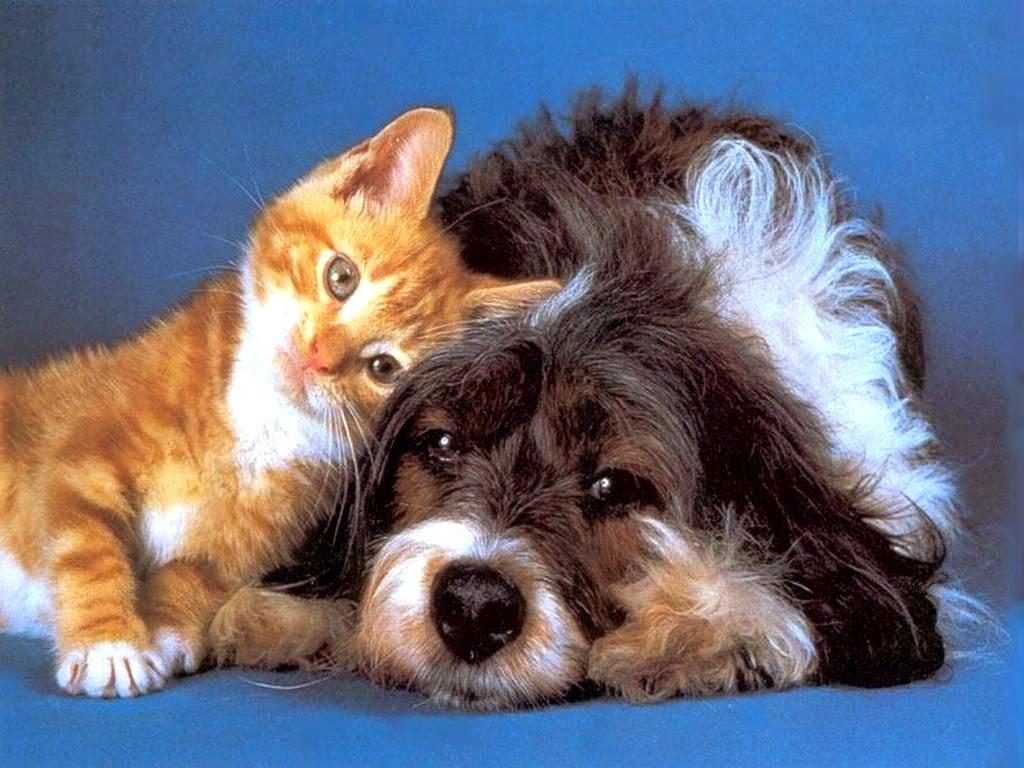 Kedi ve köpek tüyü nasıl temizlenir