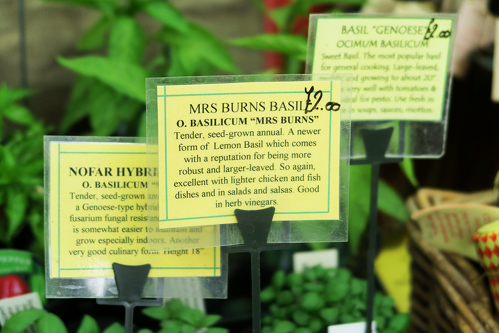 Plant stall at Kirkstall Deli Market
