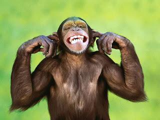 новогодние загадки про обезьяну для детей и взрослых