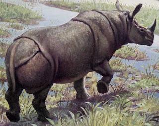 Badak Jawa