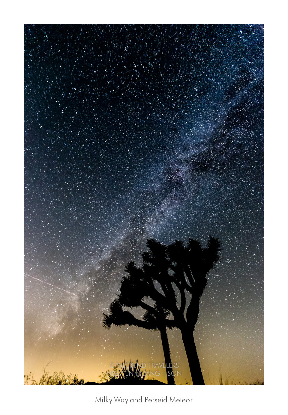 Joshua Tree and the milky way, desert at night