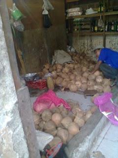 kelapa tua