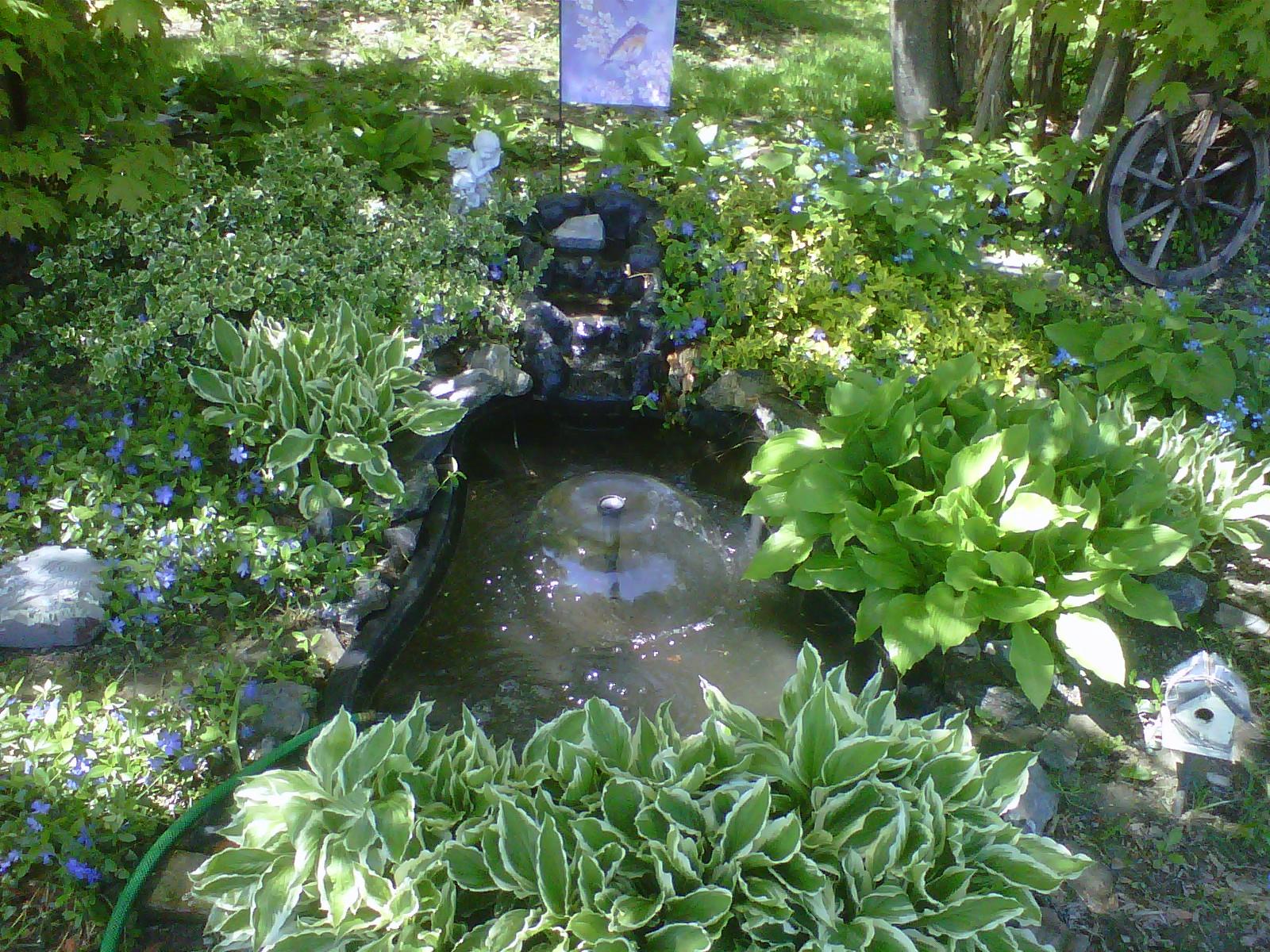 Inside storey bloom day for Flower garden ponds