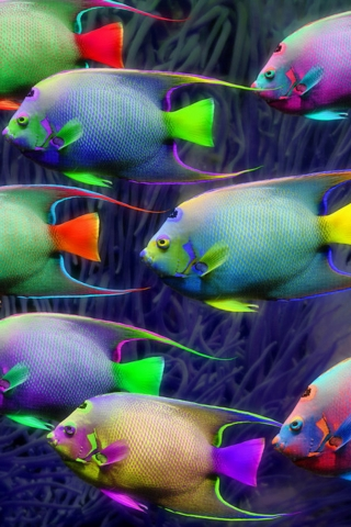 very nice iphone fish wallpaper wallpaper pictures
