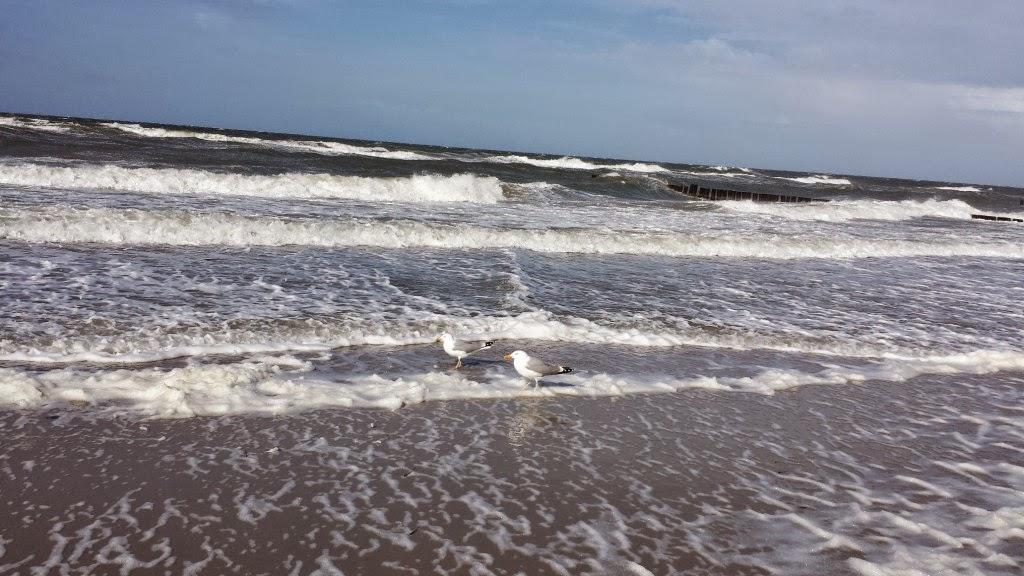 Möwen im Meer