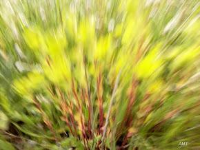 Desenfoques de movimiento en fotografía de naturaleza