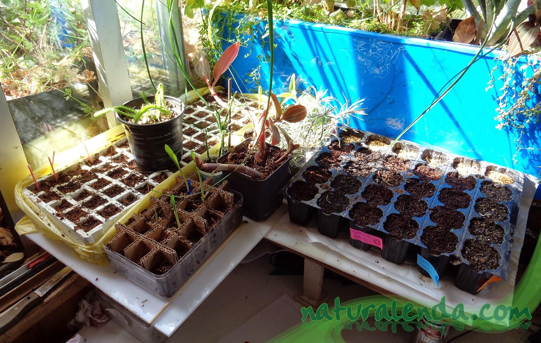 los semilleros en mi habitación