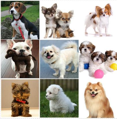 TOP 10: Cachorros fofos