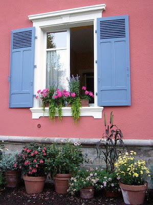 2flowers in the window of our house
