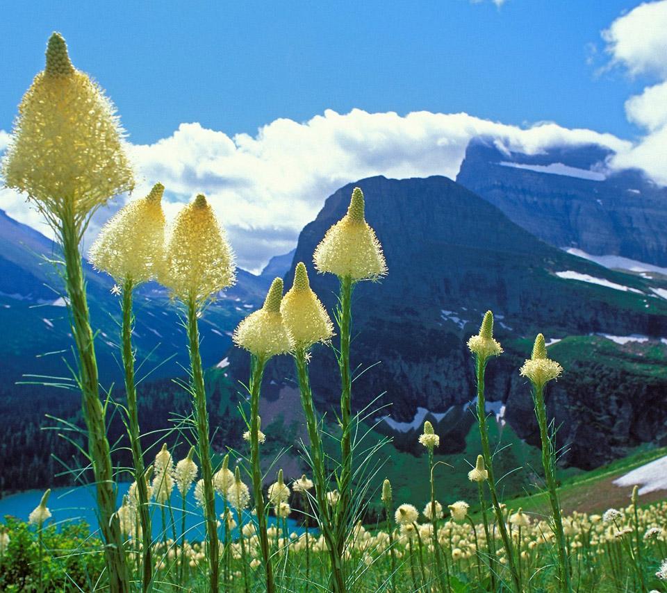 flowers for flower lovers.: flowers sceneries dsektop hd wallpapers.