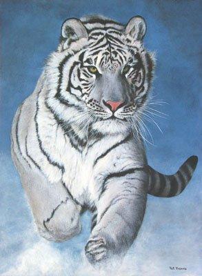 tigre-siberiano é um caçador solitário e de hábitos noturnos ...