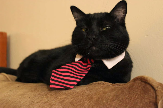 Funny cats - part 85 (40 pics + 10 gifs), cat wears tie