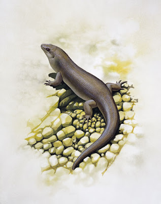 extinct skink