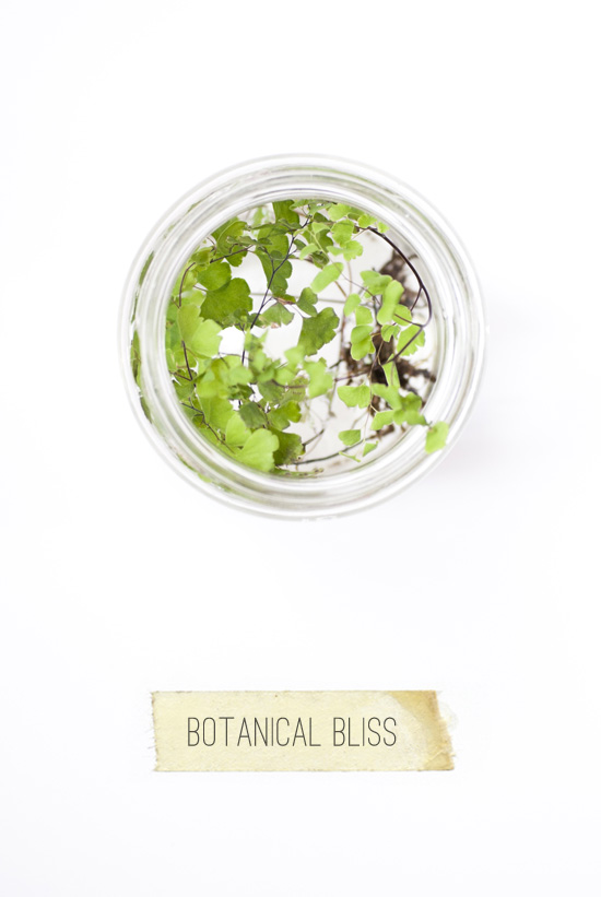 Botanical bliss