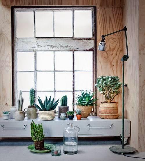 Decorar con cactus Mi Casa es Feng