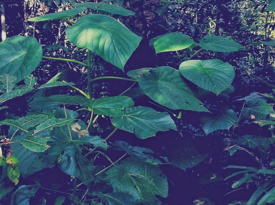 جيمبي جيمبي حكاية شجرة تقتل من يلمسها / صور ط·آ´ط·آ¬ط·آ±ط·آ©-ط¸â€ڑط·آ§ط·ع¾ط¸â€ط·آ©-.jpg