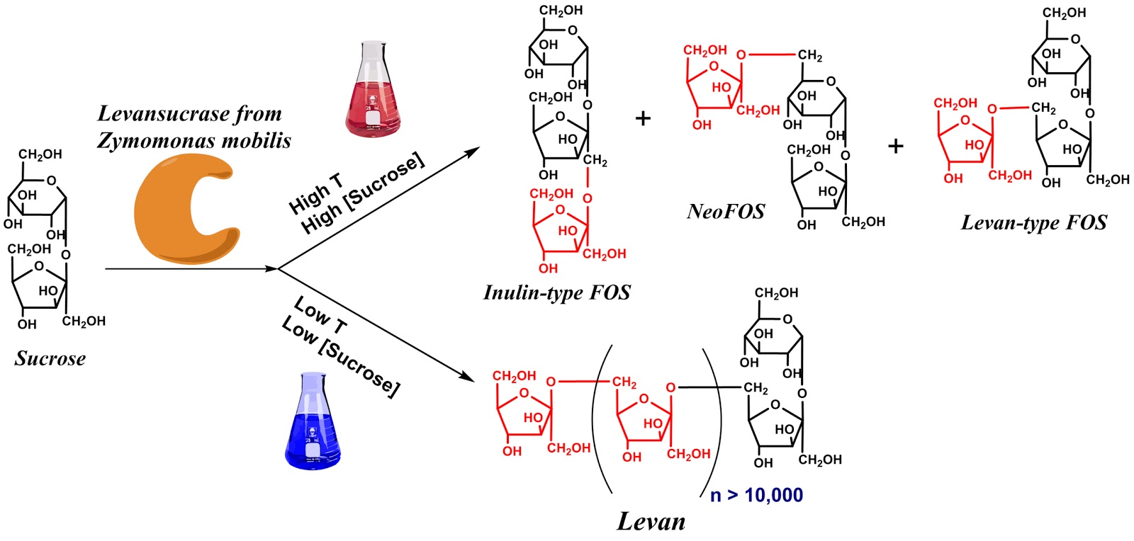 biology enzyme activity research paper Free enzymes papers, essays, and research papers biology enzymes coursework - biology the effect of temperature on the rate of enzyme activity.