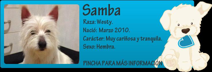 http://mirada-animal-toledo.blogspot.com.es/2014/03/samba-westy-en-adopcion.html