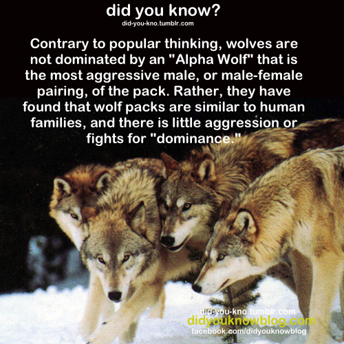 Image of a wolf pack with text above it.