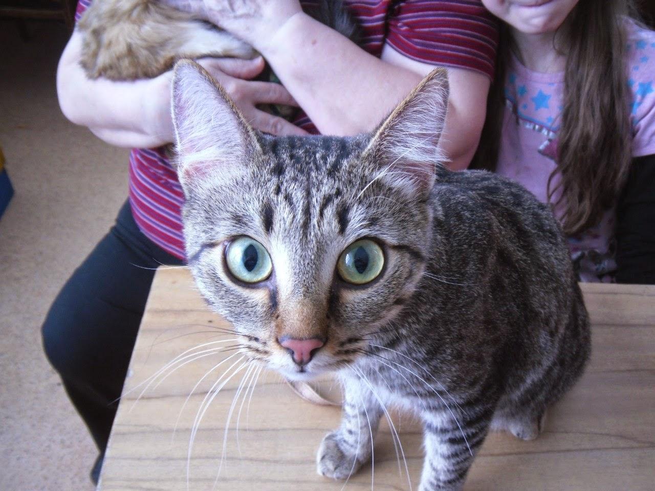 как правильно познакомить кошек